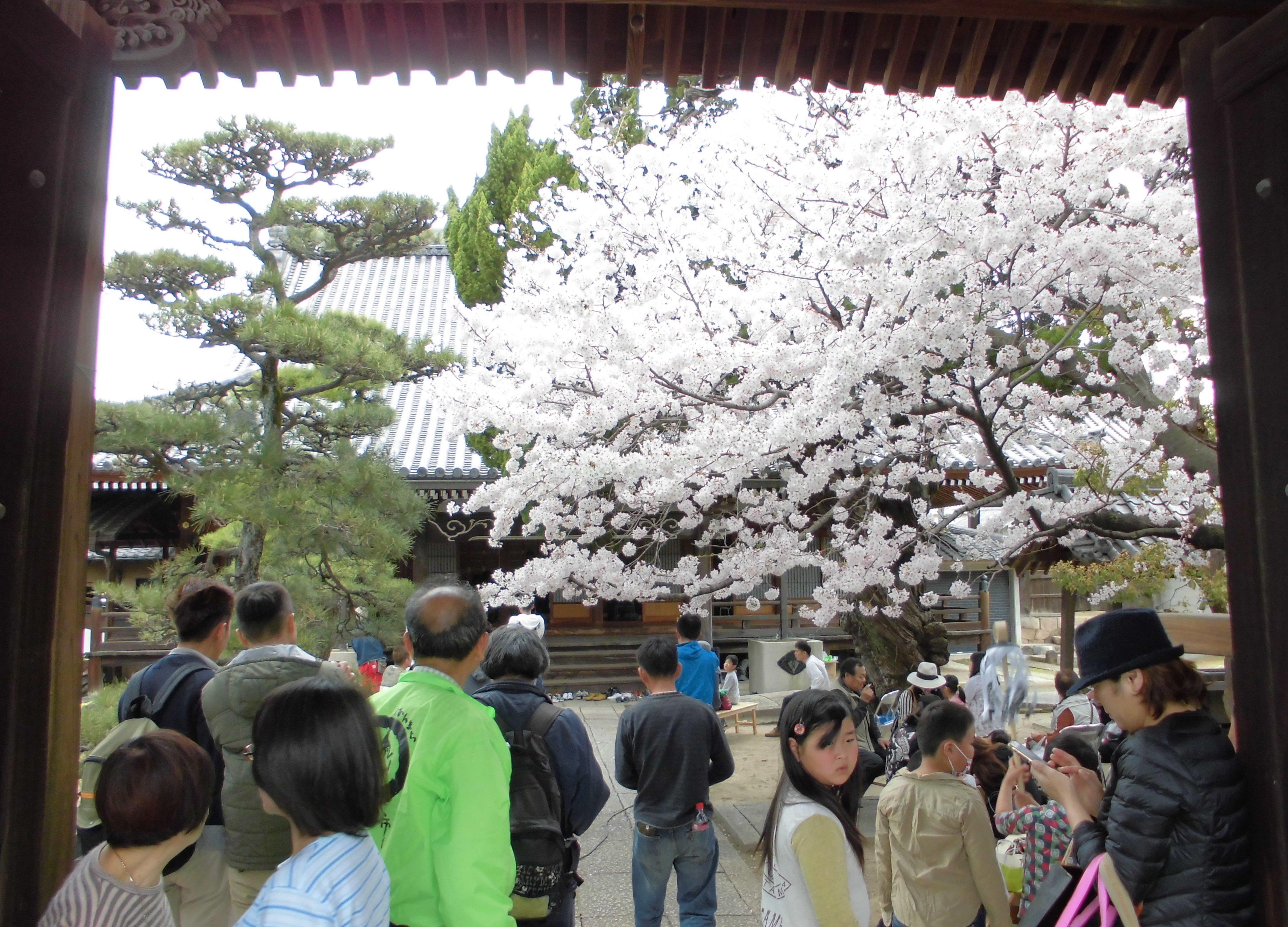 円城寺入口から